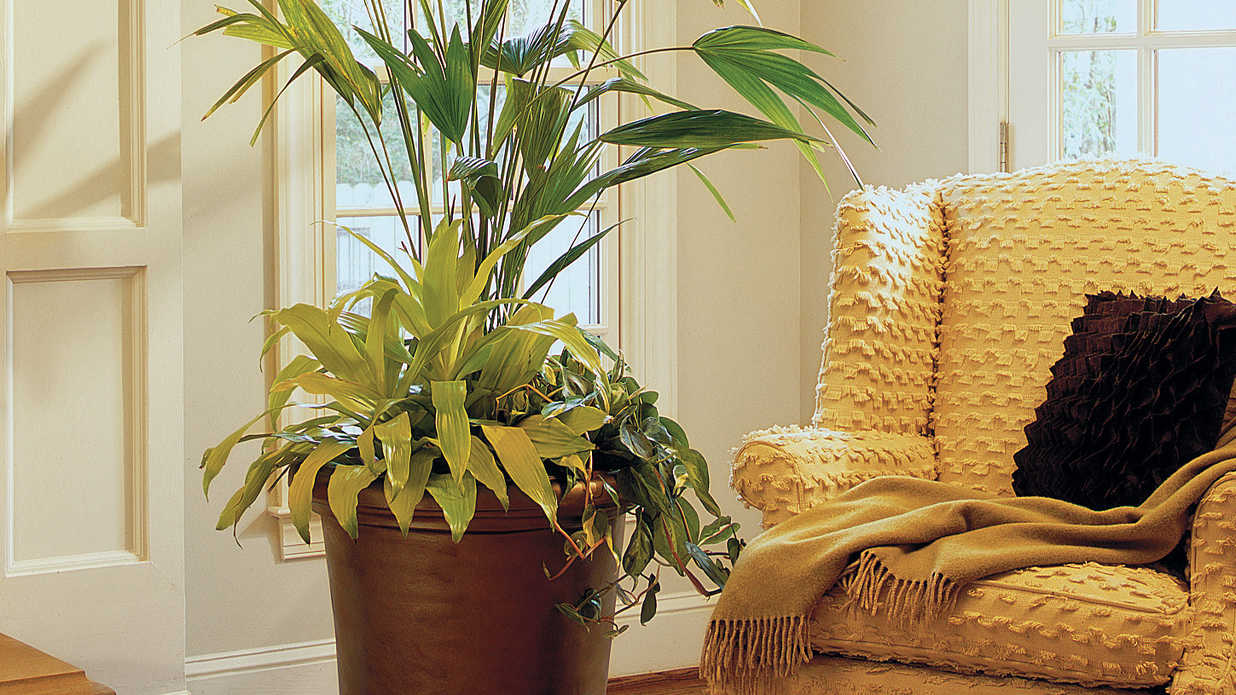 Fill in the Blank With Houseplants