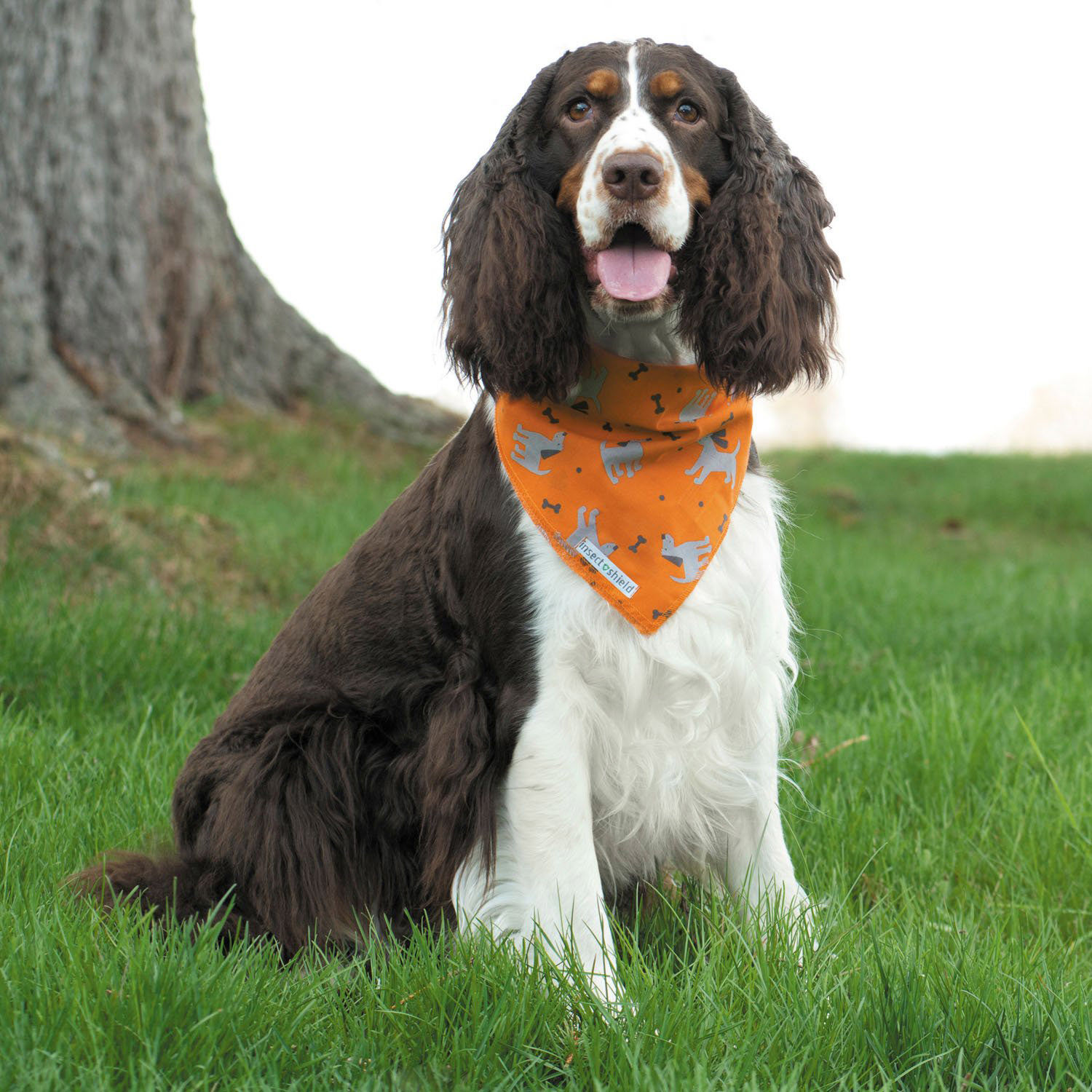 This Adorable $12 Dog Bandana Repels Ticks and Other Insects — and You Can Get it on Amazon