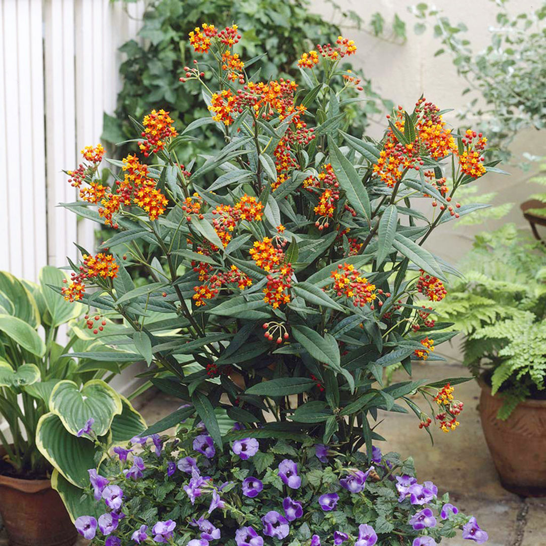 Amazon Is Now Selling a $15 Plant That Attracts Butterflies to Your Yard