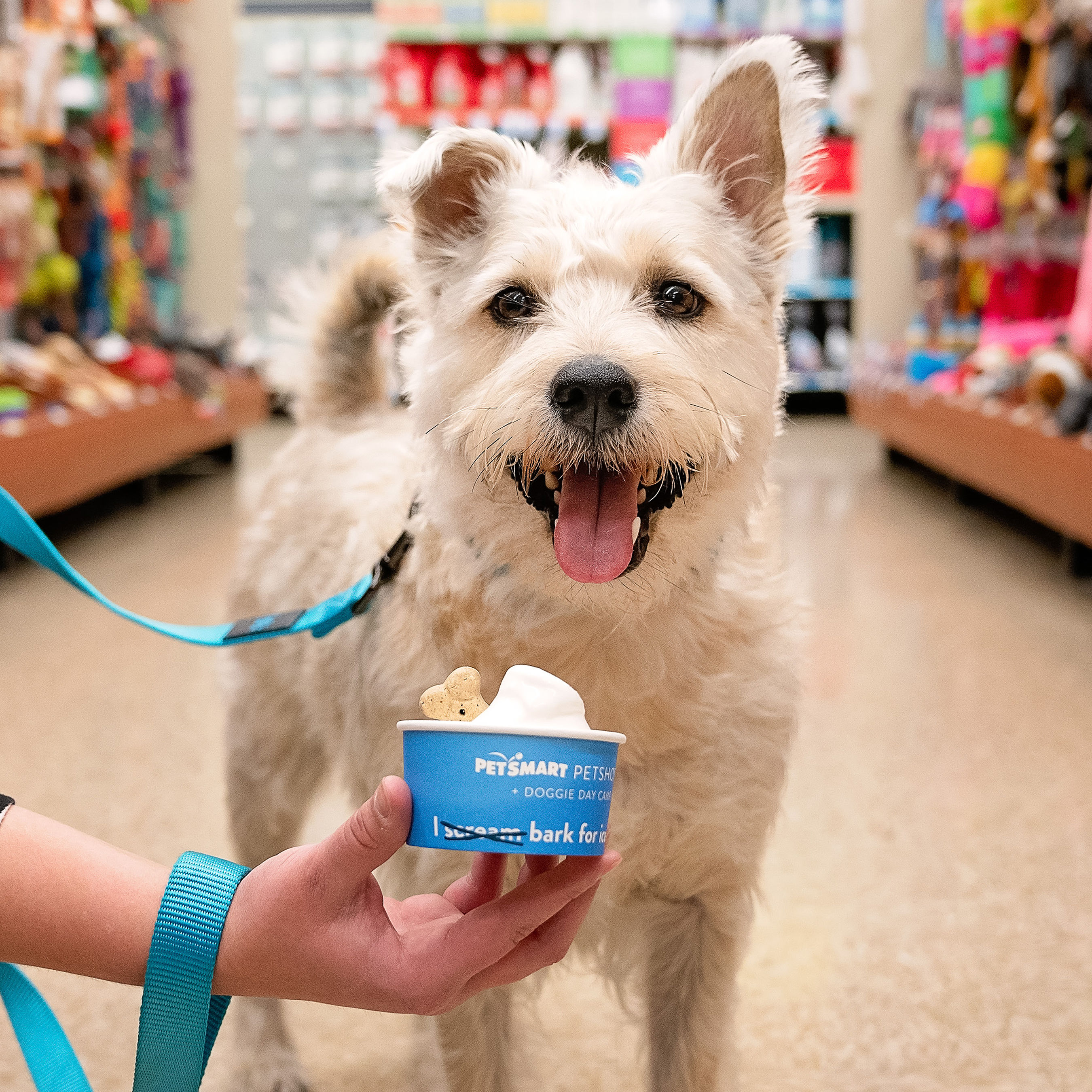 PetSmart Is Giving Out Free Dog-Friendly Sundaes to Pups to Celebrate National Ice Cream Month