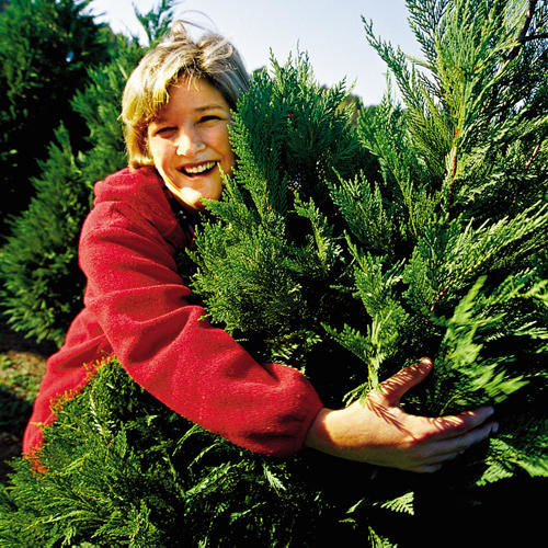 Start a Tree-Cutting Tradition