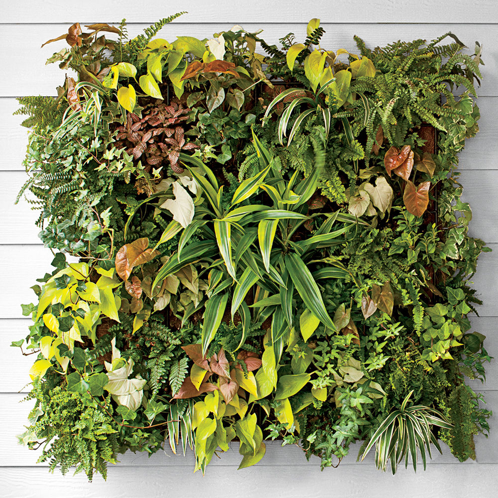 How to Plant a Living Vertical Wall Garden