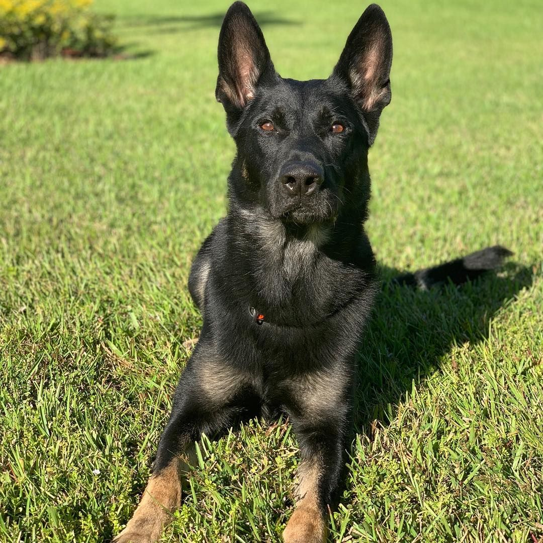 Young Boy Pens Moving Letter to Florida Police Officer Whose K9 Died in Shootout