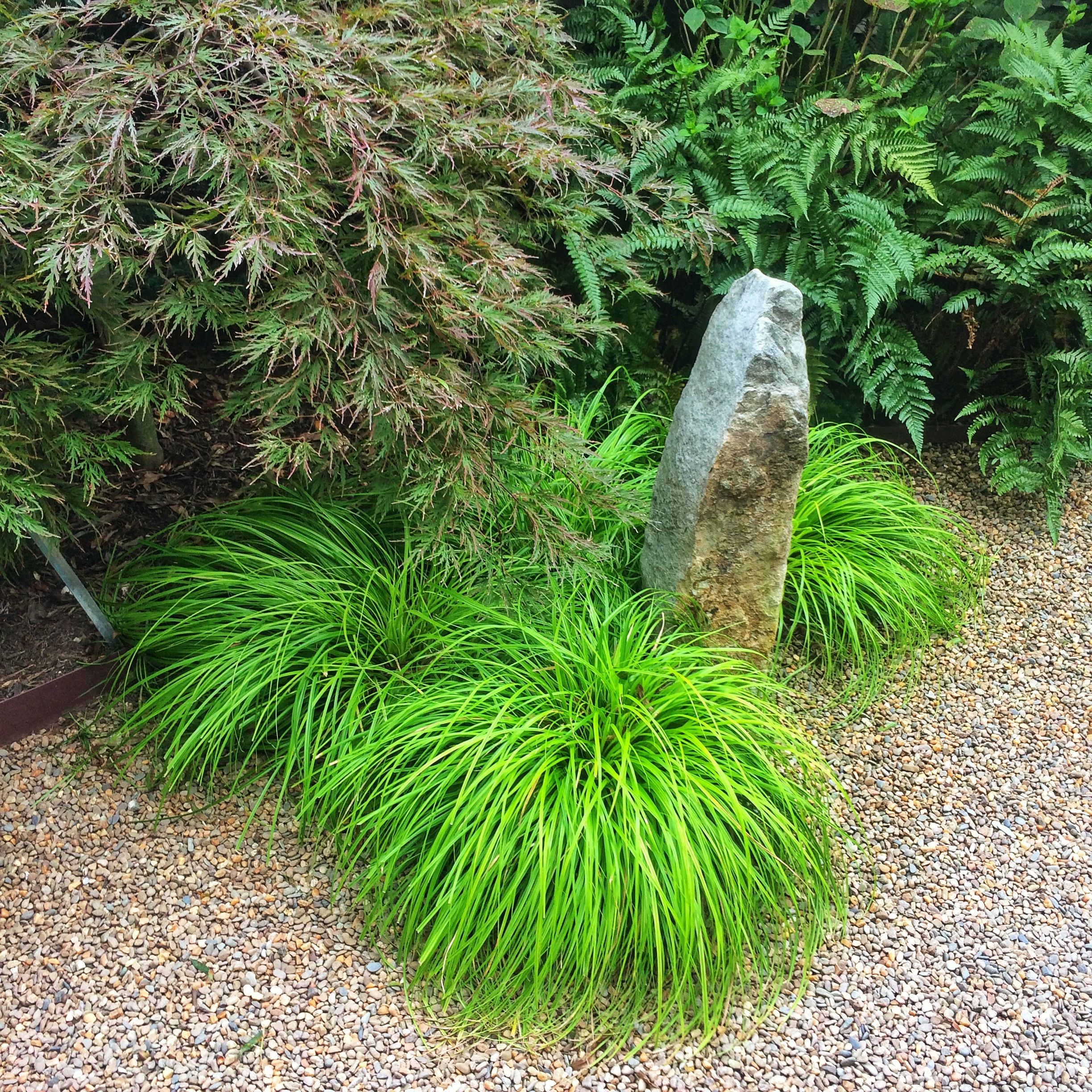 Meet the Drought-Beater – 'Everillo' Carex