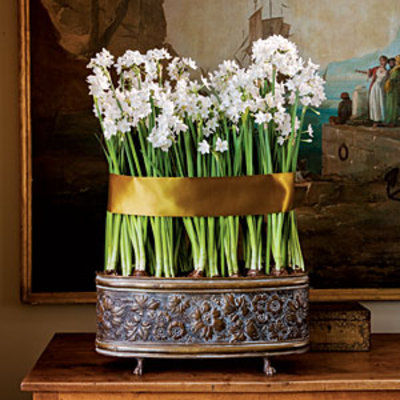 Can Your Paperwhites Be Saved?