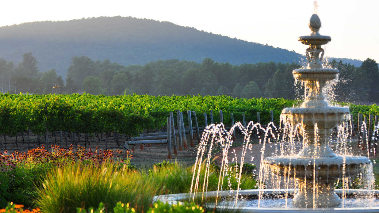 The South's Best Vineyards