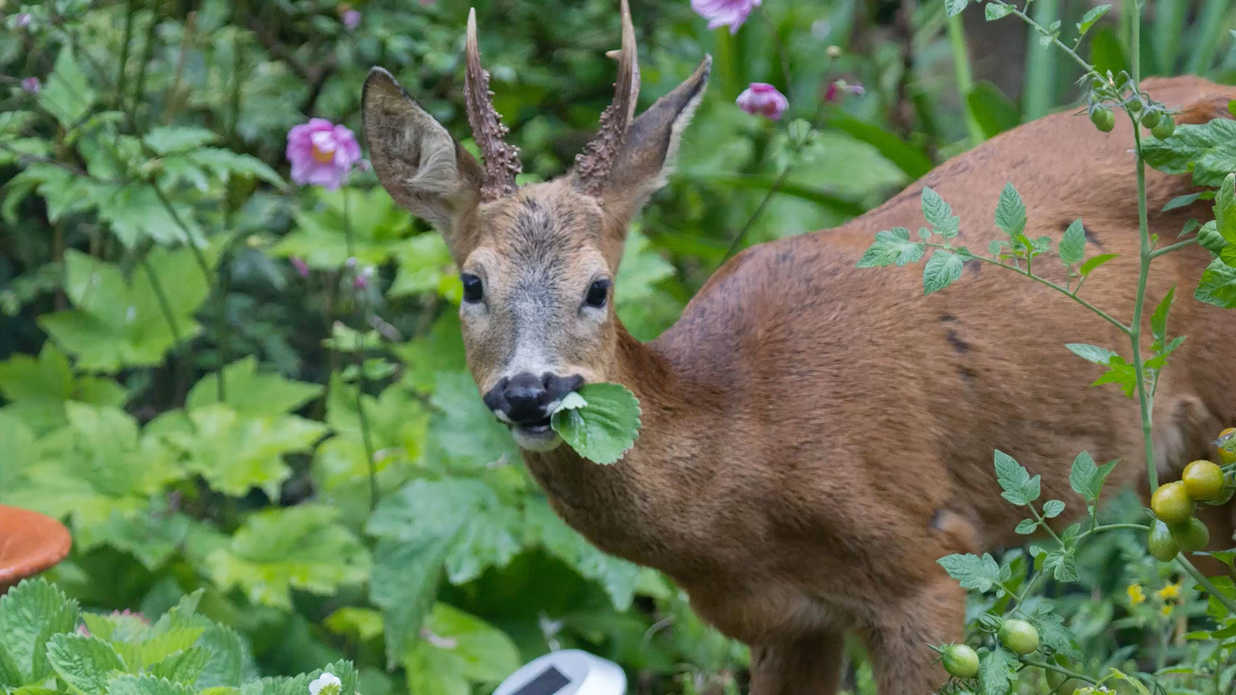 How To Deer Proof Your Garden Southern Living