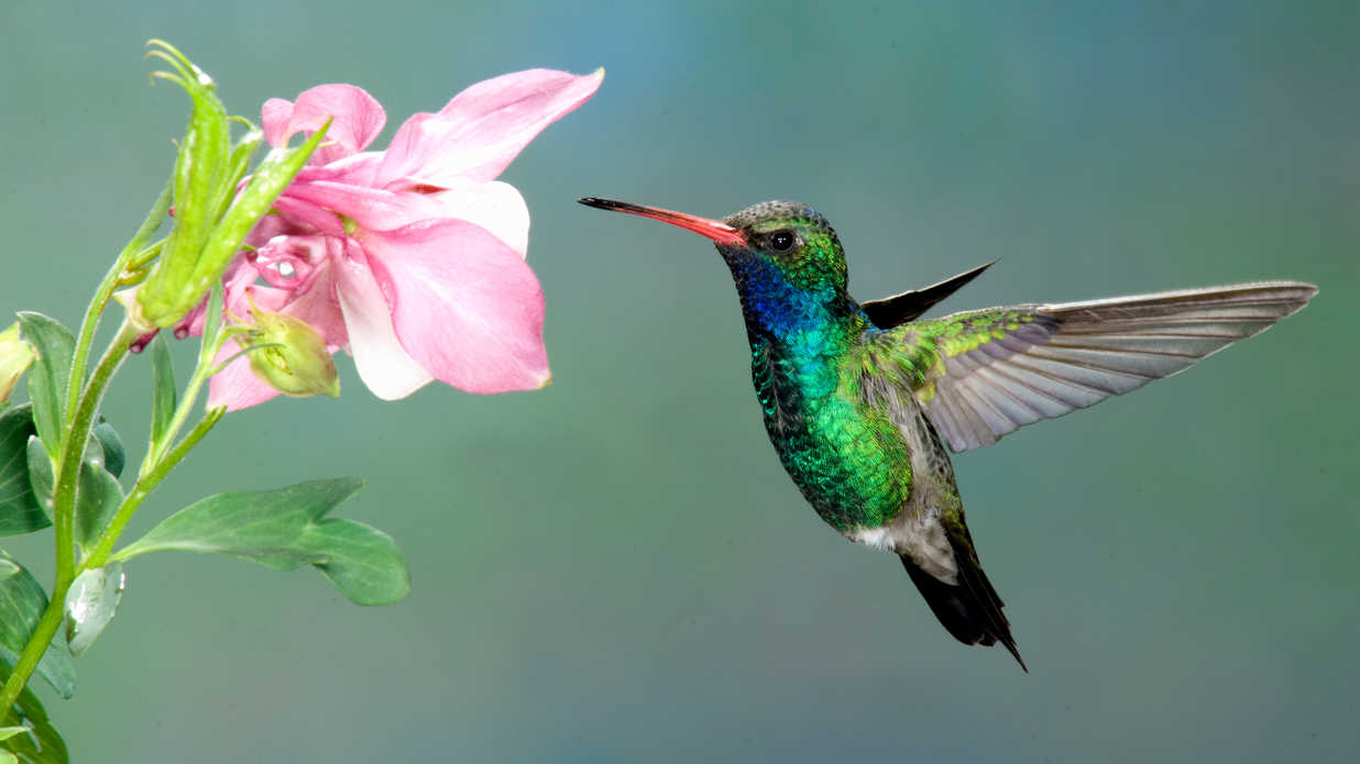 getty hummingbird