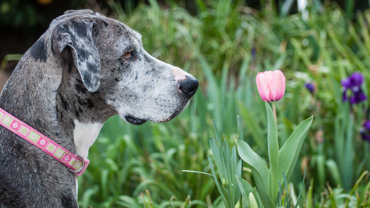 Best and Worst Flowers to Plant for a Pet-Friendly Garden - Southern Living