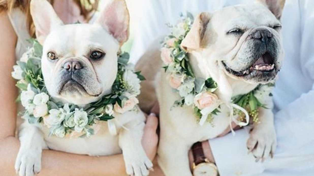 9 Dapper Ways to Dress Your Dog For Your Wedding Day