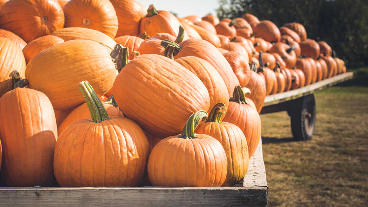 WATCH: This Southern Town Is the Pumpkin Capital of America