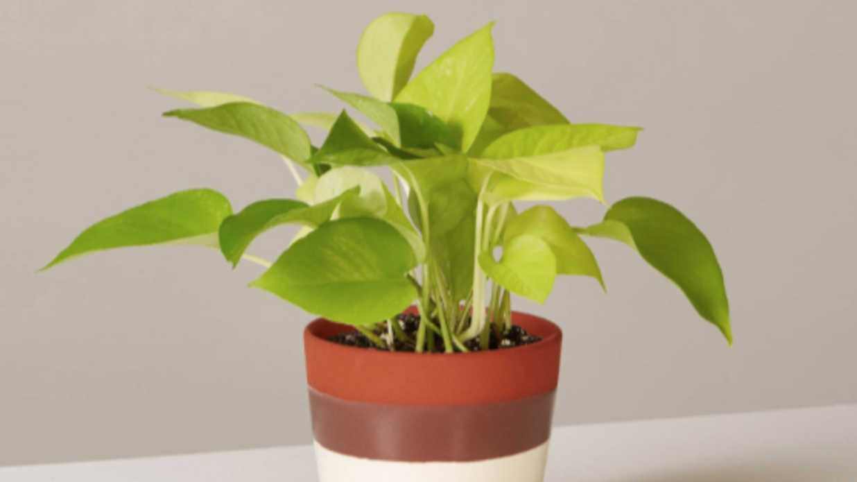 20 Easy Houseplants Even Beginners Can't Kill