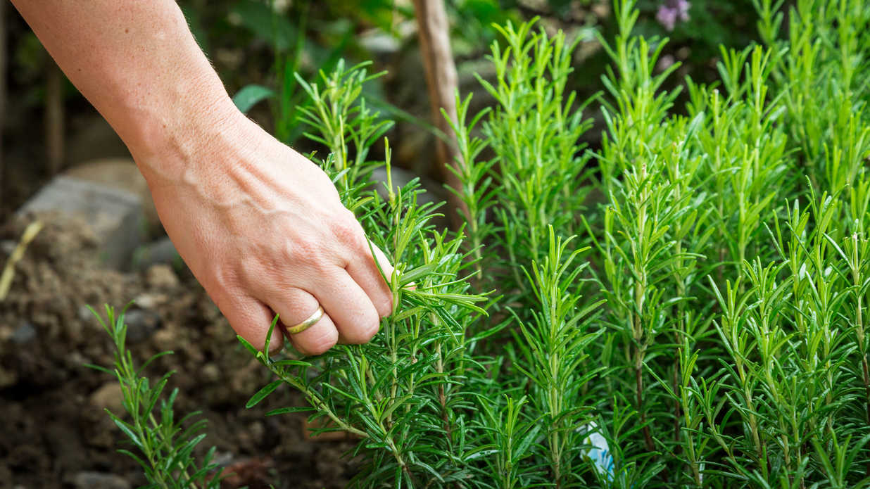 The 8 Easiest Herbs to Start an Herb Garden