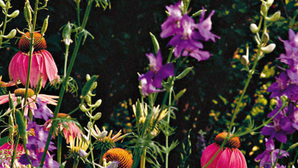 Flowers That Plant Themselves Southern Living