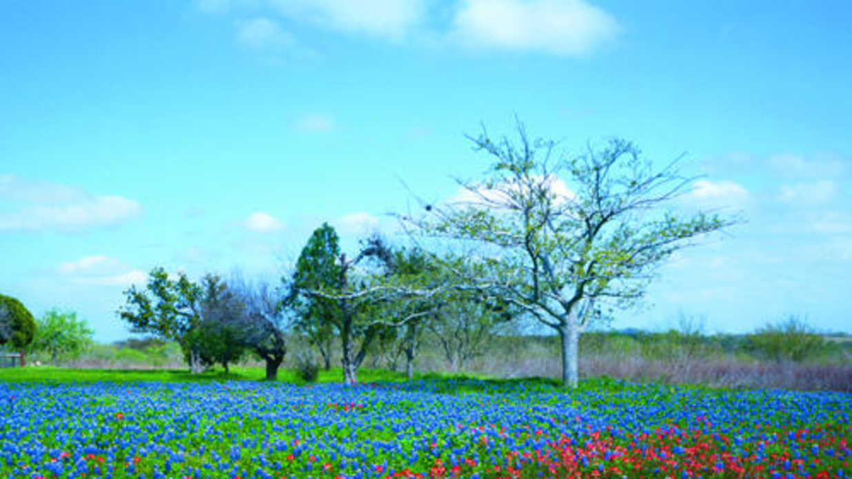 40 Things I Love About Texas