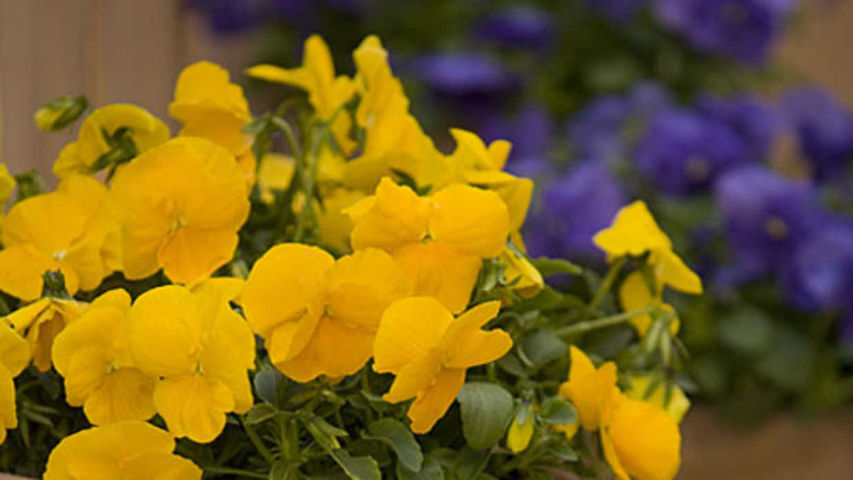 Southern Living Style Guide How To Choose Between Annuals And