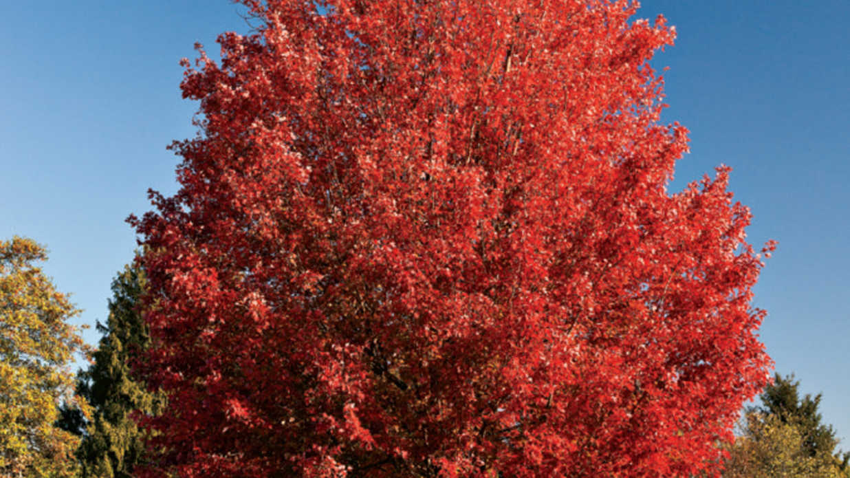 10 Best Plants for Fall