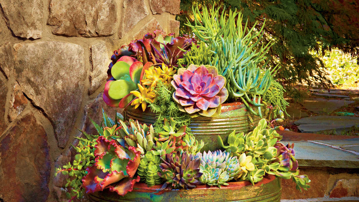 Succulent Container Gardens That Still Look Good Even If It's Pushing Triple Digits Out There