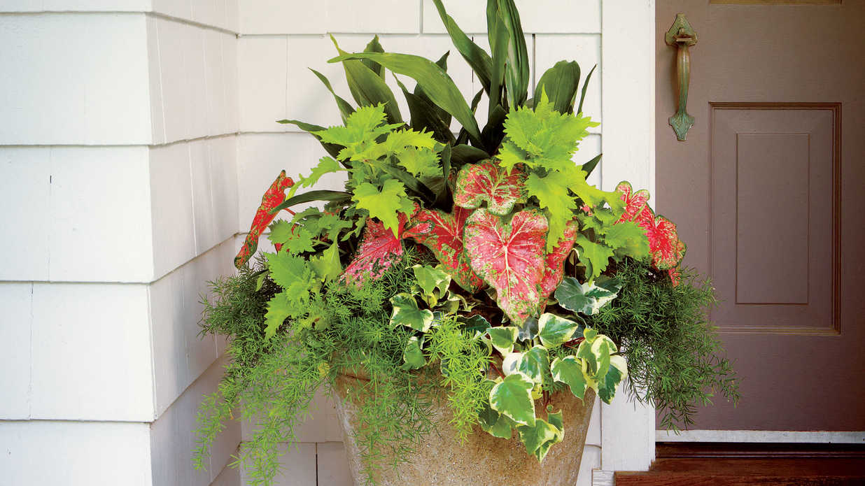 Easy container made for shade southern living - Container gardens for shade ...