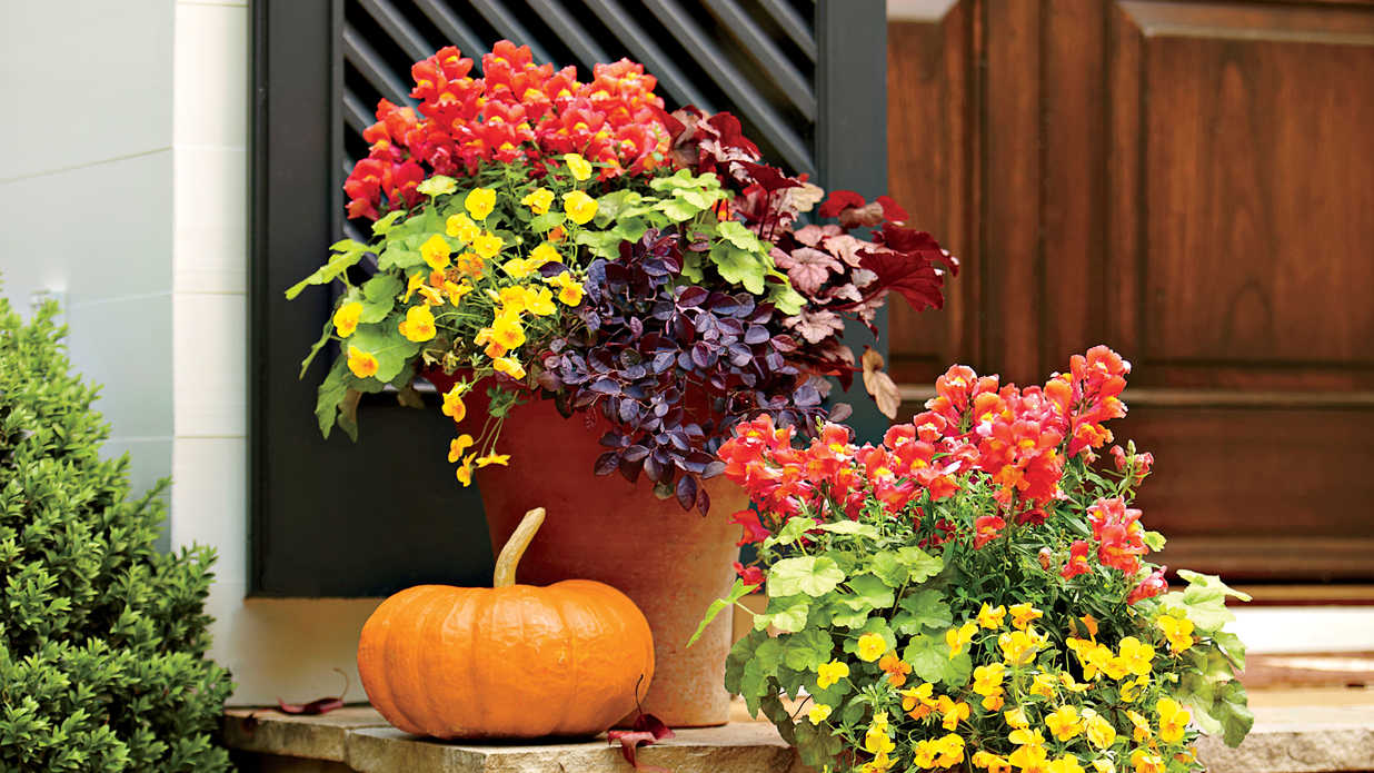 Plant a Vint Fall Container - Southern Living on large flower pot design, hardy container garden design, container garden front yard, container pots flowers ideas, container flower garden south, container herb garden design, container pots with white flowers, container garden color ideas, plant pot flower design, hibiscus container garden design, container spring garden ideas, container flower gardens landscape design, backyard idea tropical garden design,