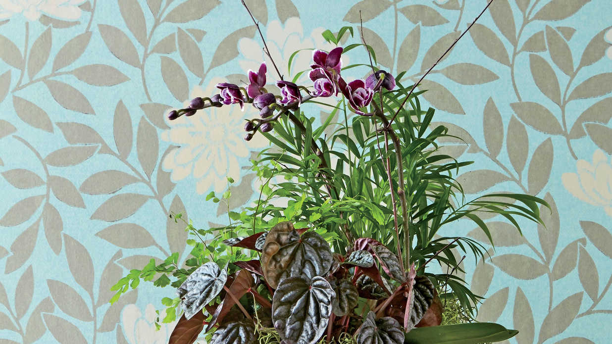 Indoor Container Gardening Ideas