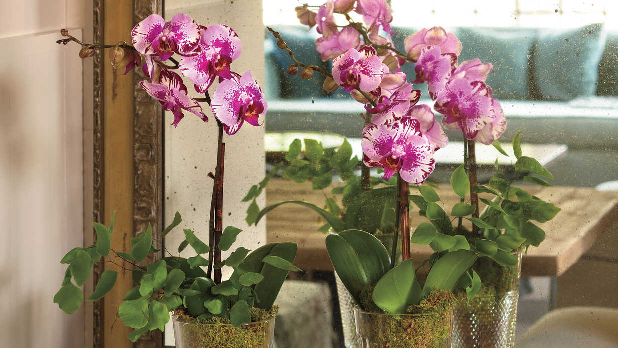 Easy-To-Grow Houseplants