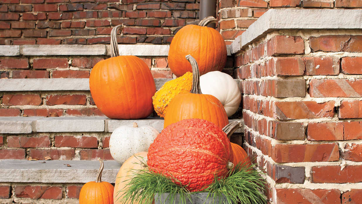 6 Instant Pumpkin Displays