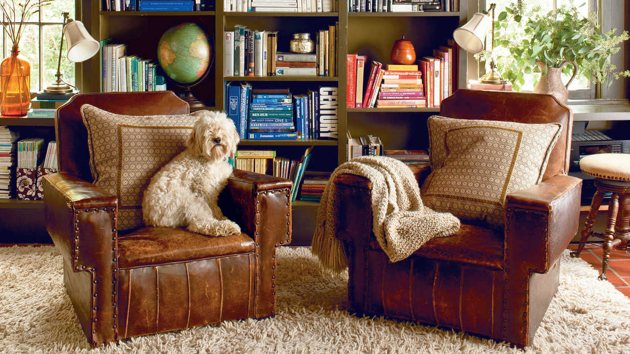 Cute Overload! Adorable Pups in Pretty Rooms