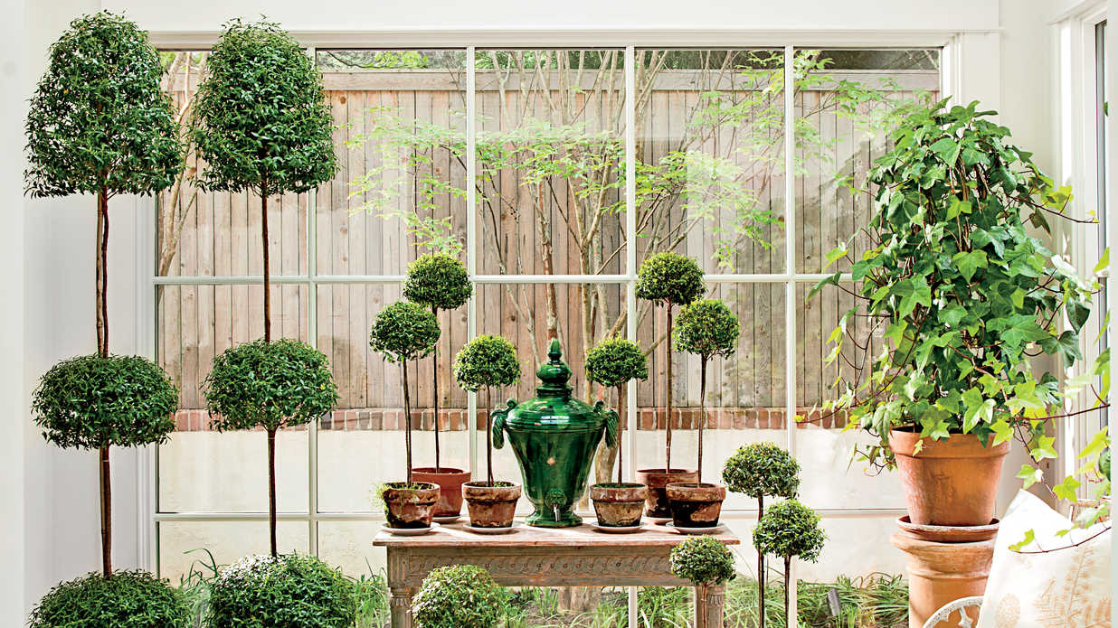 Potted Topiary Trees for Winter