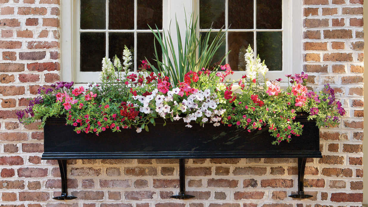 Container gardening southern living izmirmasajfo