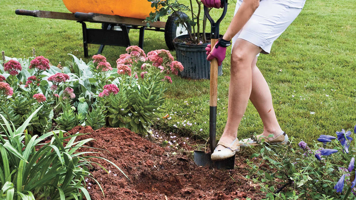 How To Plant a Crepe Myrtle with Success