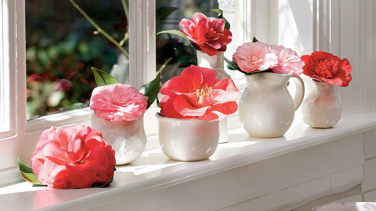 Winter Flowers for Your Windowsill