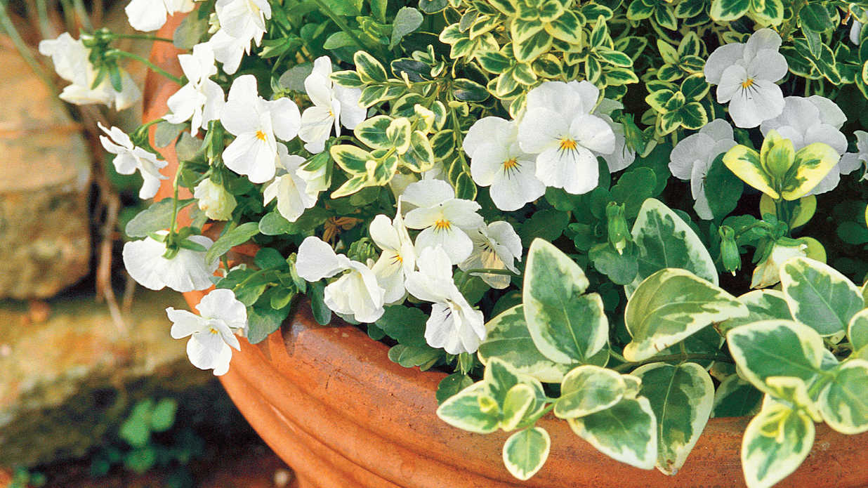 Secrets for Great Fall Pots