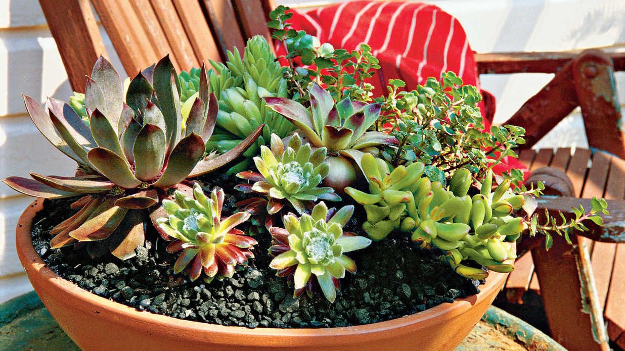how to plant succulents in containers southern living. Black Bedroom Furniture Sets. Home Design Ideas