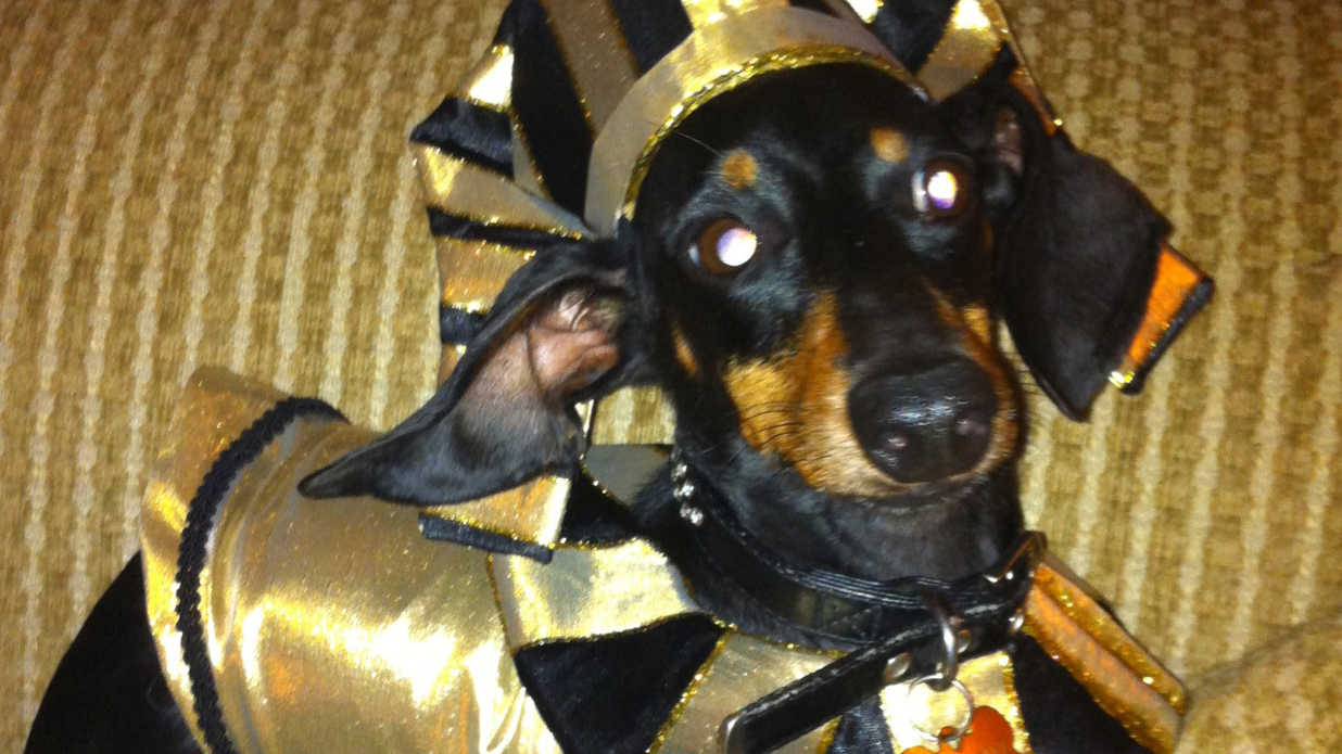 King Tut Pet Halloween Costumes Southern Living