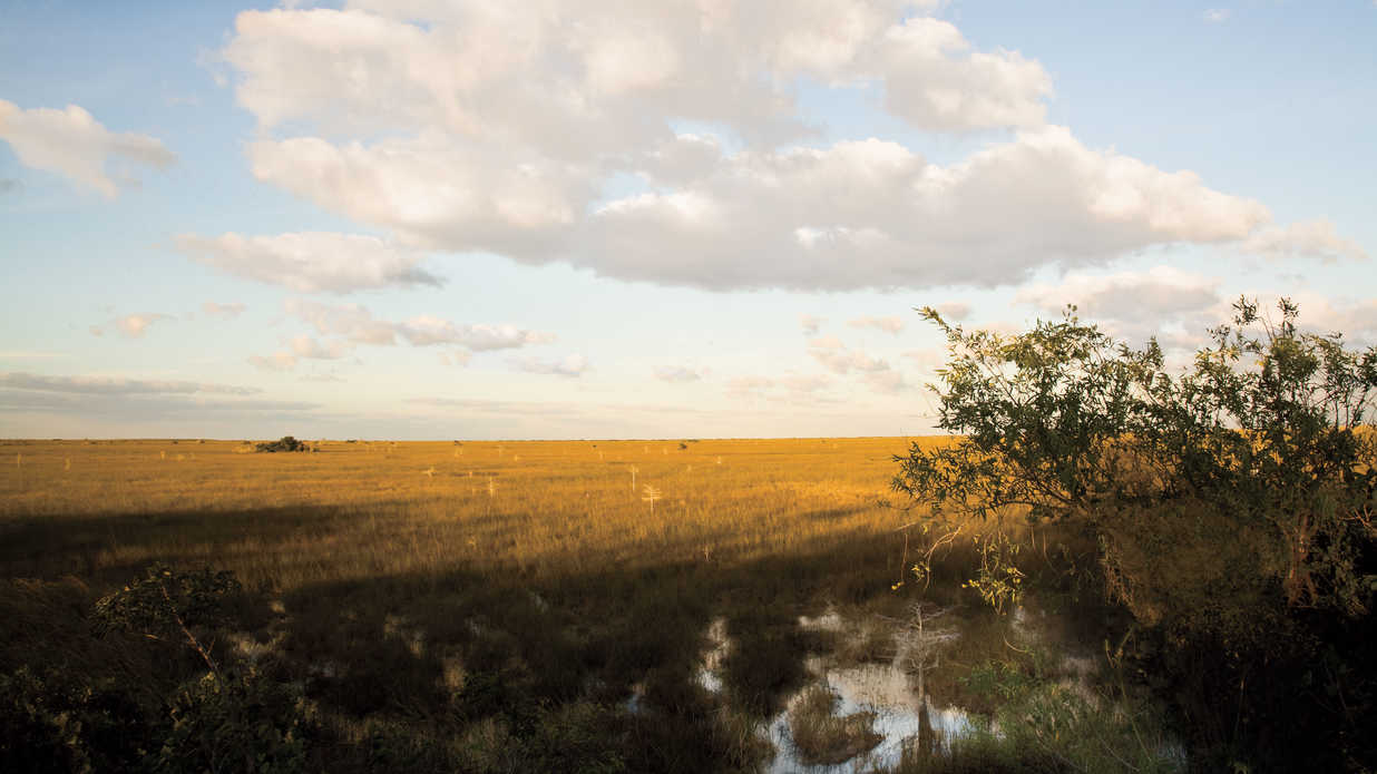 Why The Everglades Owns My Heart