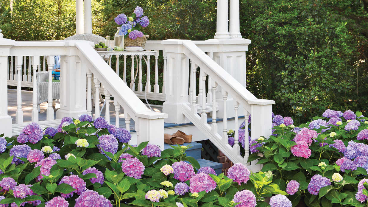 how to change your hydrangea color blue pink u0026 white hydrangeas southern living - Hydrangea Bush