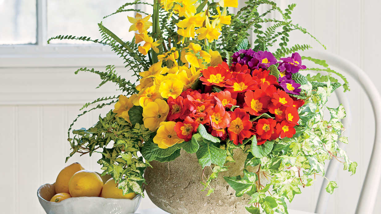 Show Off Winter Color with Primroses - Southern Living
