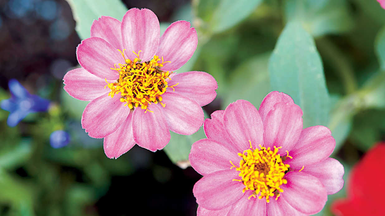 Spring Blooming Perennials and Annuals