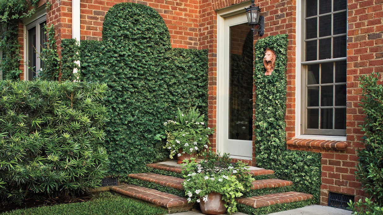 Low Cost Charm Creeping Fig Southern Living