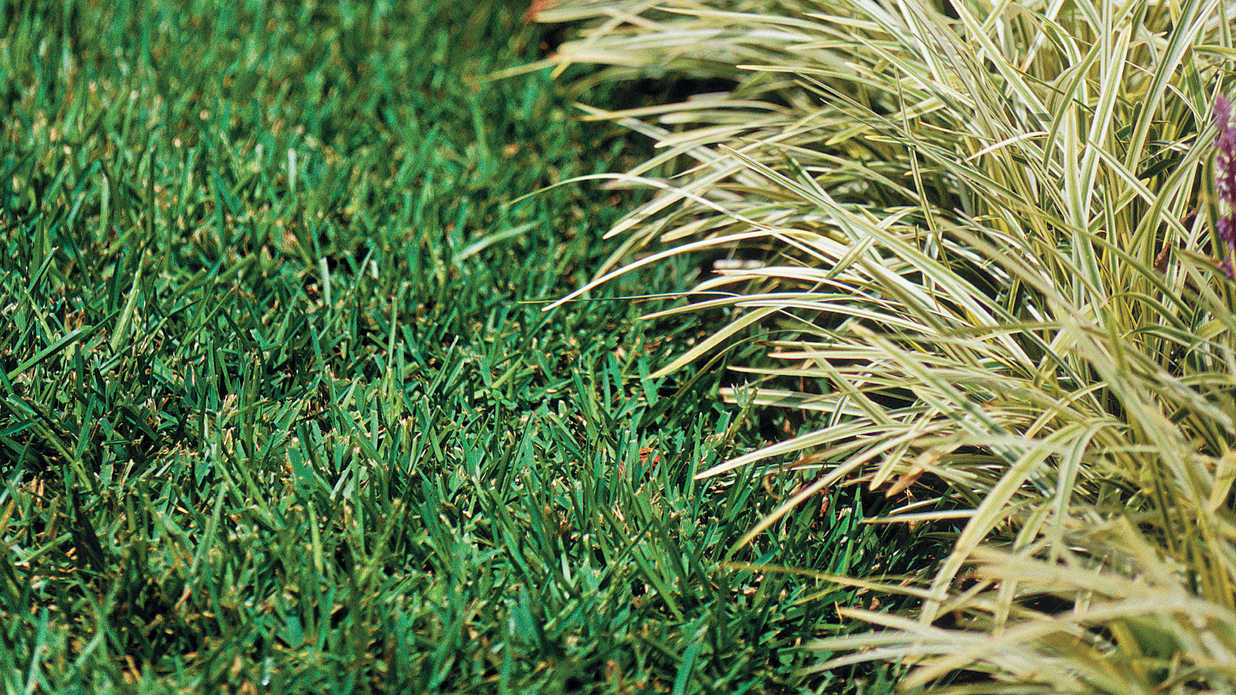 Smart choices with monkey grass southern living for Best grasses for borders