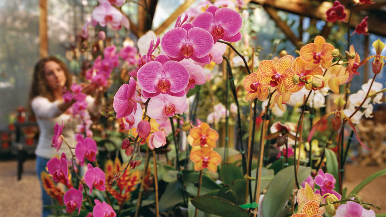 Garden Guide Flowers Southern Living