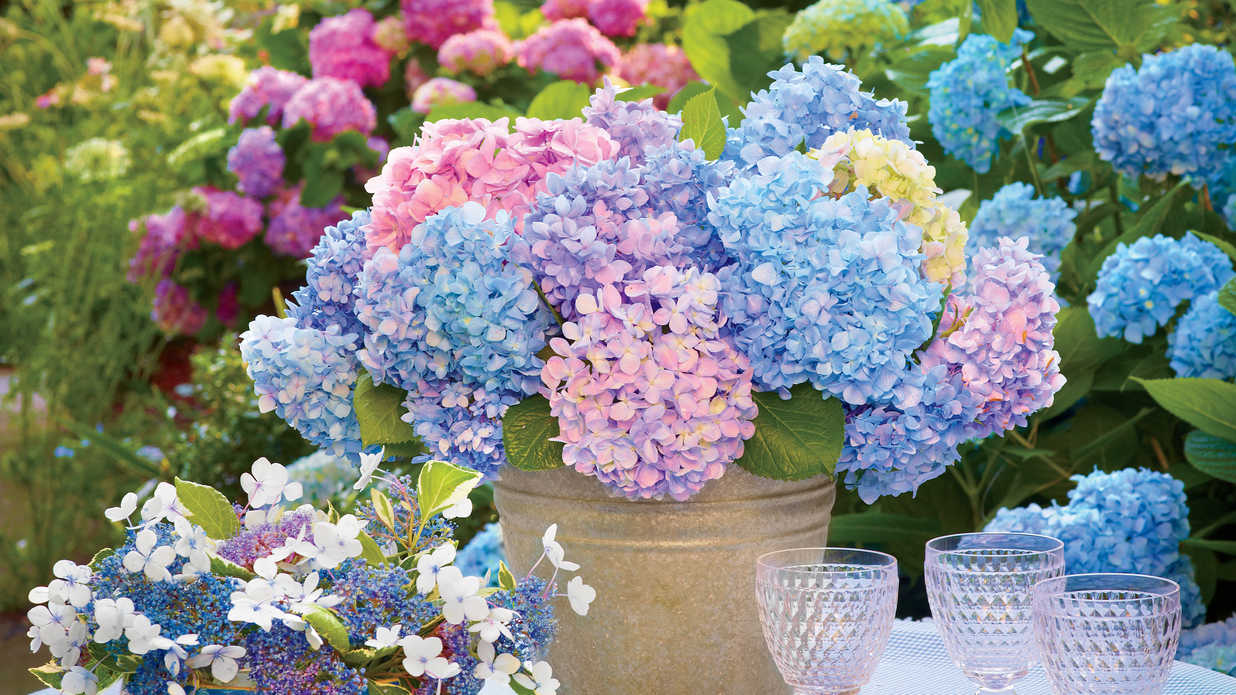 How to keep cut hydrangeas from wilting southern living izmirmasajfo
