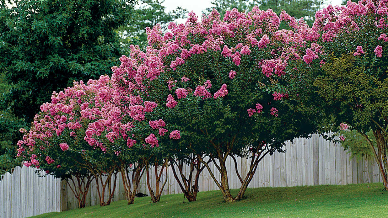 The Best Small Trees for Small Yards in the South