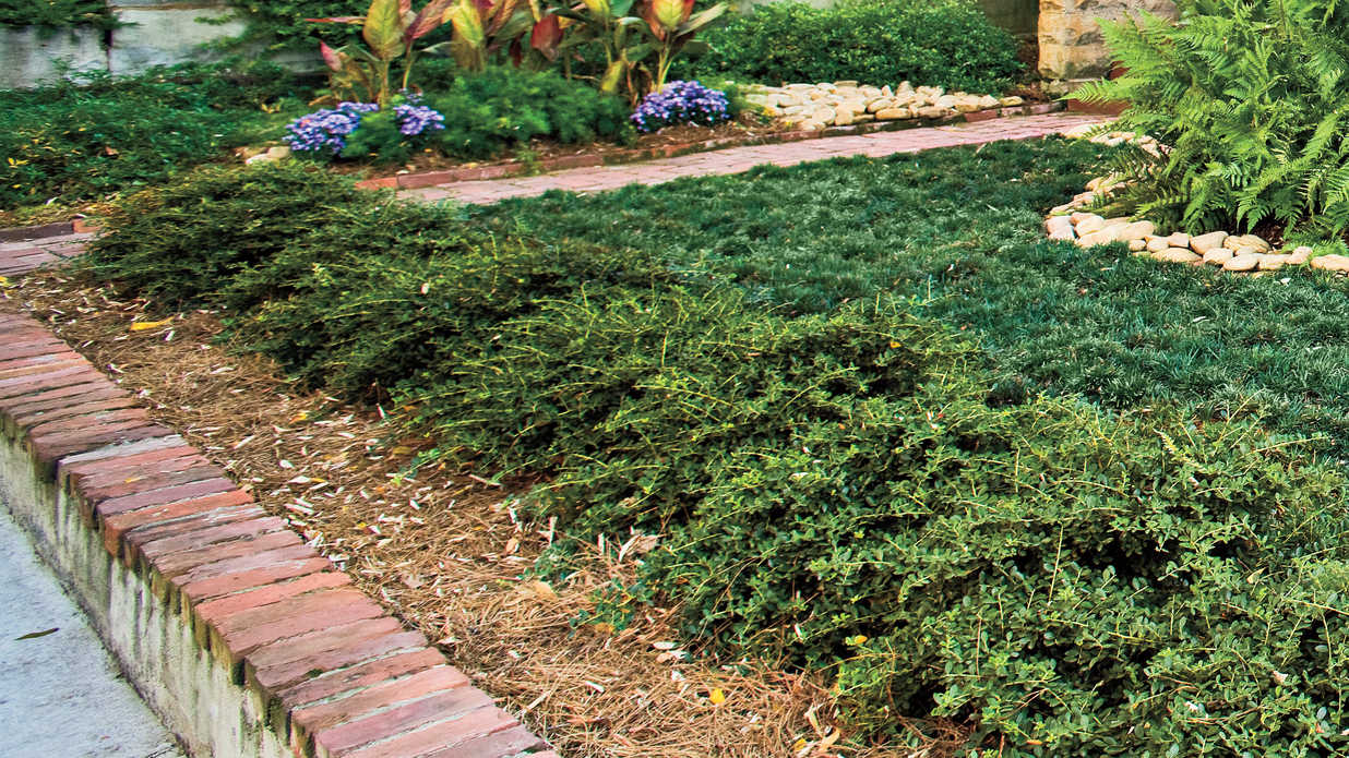 Microsize Your Garden - Easy, No Mow Lawns - Southern Living on No Mow Backyard Ideas id=16684