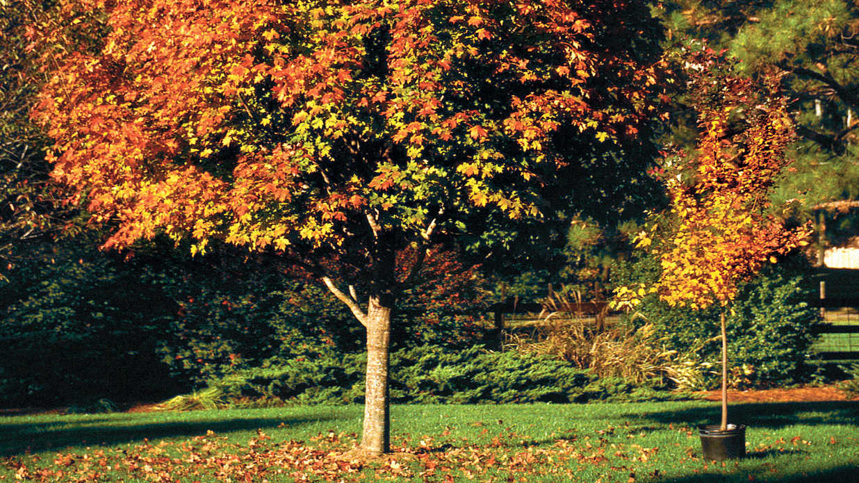 choose the right tree southern living