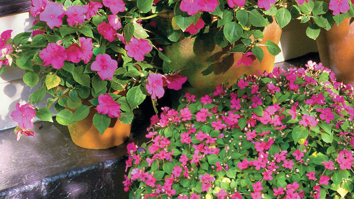 what to plant in your garden in february southern living