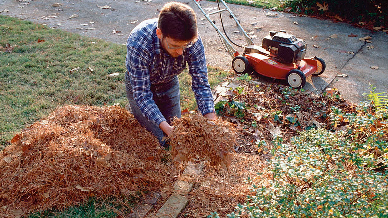 The Best and Worst Mulch for Your Garden - Southern Living