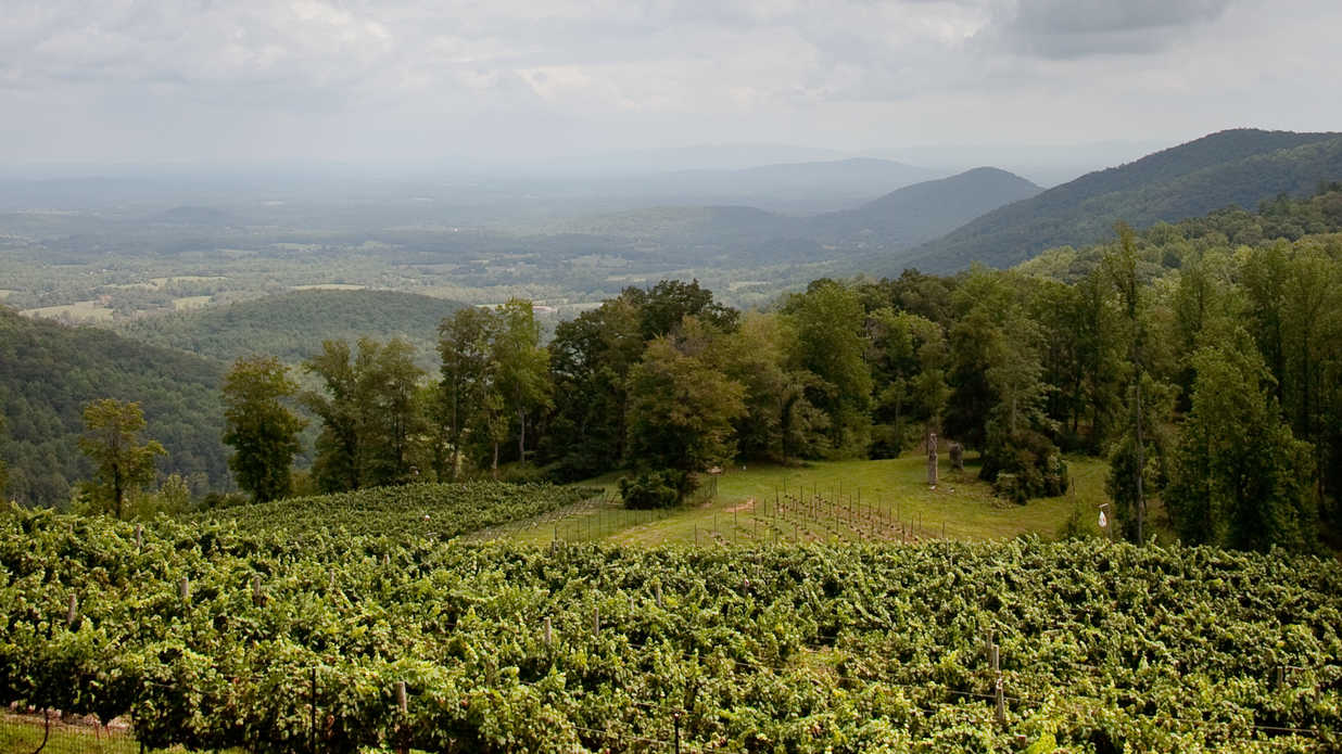 Sponsored: Virginia is for Wine Lovers
