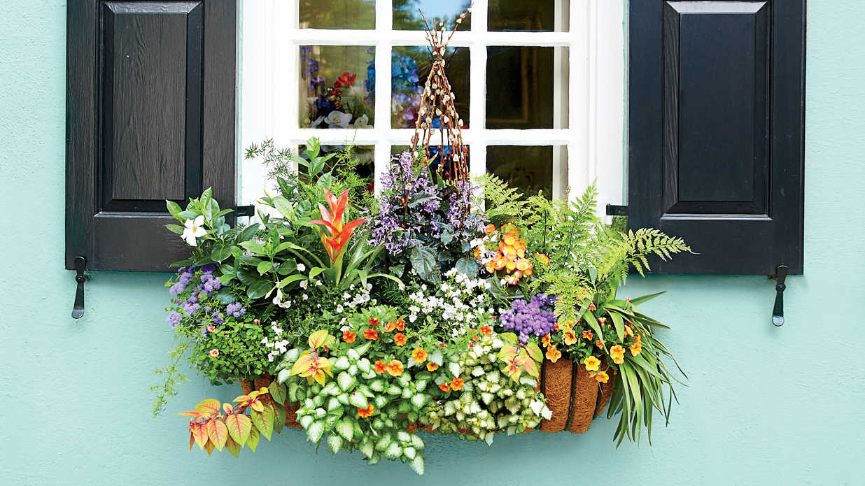 how to plant a window box shady add charm with window boxes southern living